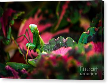 Here I Am Canvas Print by Robert Bales