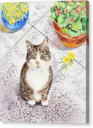 Here Kitty Kitty Kitty Canvas Print by Irina Sztukowski