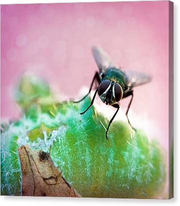 Here's Looking At You Canvas Print by Jon Woodhams