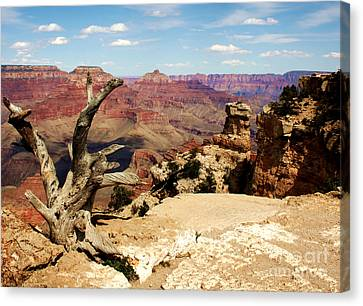 Hermit's Crow - Grand Canyon Canvas Print by Juan Romagosa