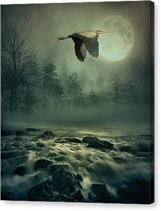 Heron By Moonlight Canvas Print by Andrea Kollo