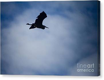 Heron In Flight Canvas Print by Graham Foulkes