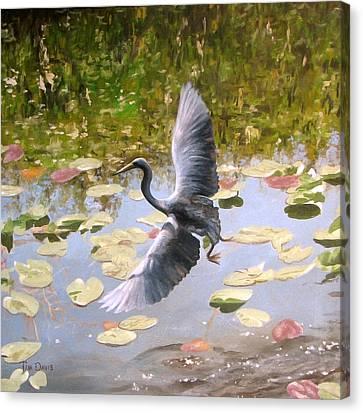 Heron In Flight Canvas Print by Tim Davis