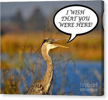 Heron Wish You Were Here Card Canvas Print by Al Powell Photography USA