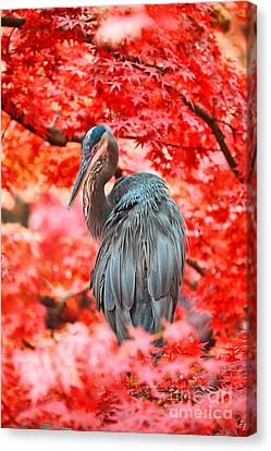 Heron Wonderland Canvas Print by Douglas Barnard