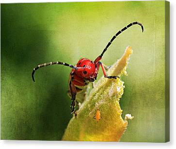 Hey - What Are You Doing On My Leaf ? Canvas Print by Donna Kennedy