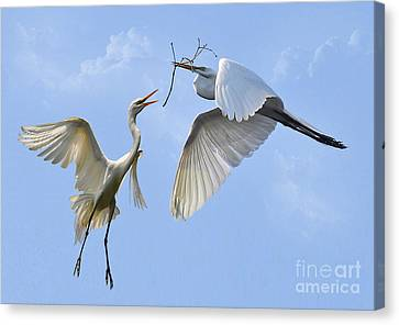 Hey...go Find Your Own Stick Canvas Print by Kathy Baccari