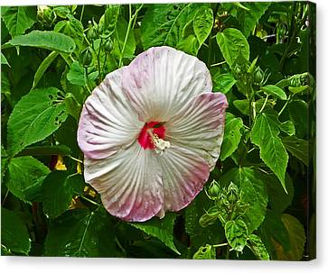 Hibiscus Canvas Print by Aimee L Maher Photography and Art Visit ALMGallerydotcom