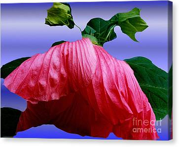 Hibiscus Bloom Wilted Canvas Print by ImagesAsArt Photos And Graphics