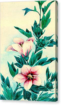 Hibiscus Flowers 1870 Canvas Print by Padre Art