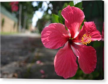 Hibiscus Canvas Print by Frederico Borges