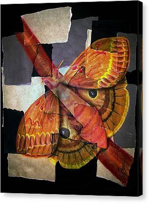 Hidden Beauty Canvas Print by Ryan Burton