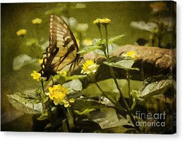 Hidden Treasure Canvas Print by Lois Bryan