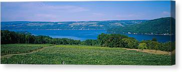 High Angle View Of A Vineyard Canvas Print by Panoramic Images