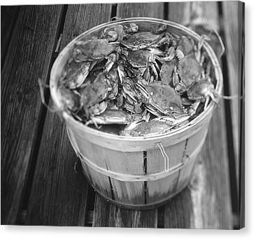 High Angle View Of Crabs In A Basket Canvas Print by Panoramic Images