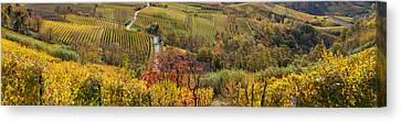 High Angle View Of Vineyards, Alba Canvas Print by Panoramic Images