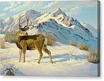 High Country Buck Canvas Print by Paul Krapf