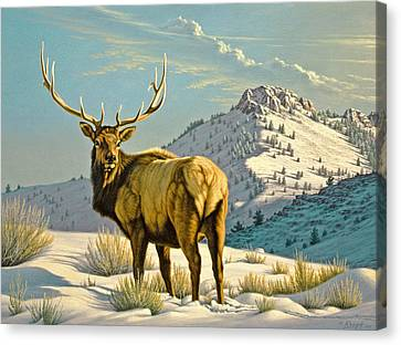 High Country Bull Canvas Print by Paul Krapf