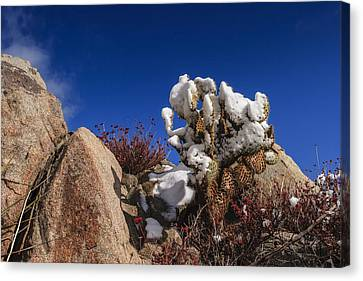 High Desert Snow 2 Canvas Print by Scott Campbell