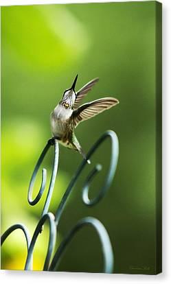 High Spirit Hummingbird Canvas Print by Christina Rollo