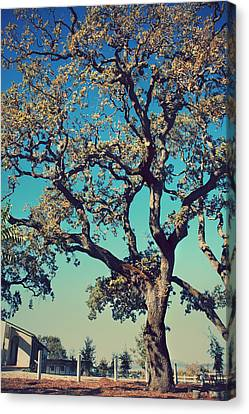 High Spirits Canvas Print by Laurie Search