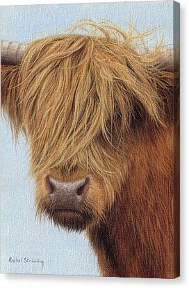 Highland Cow Painting Canvas Print by Rachel Stribbling