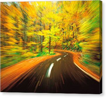 Highway Amidst Forest Canvas Print by Panoramic Images