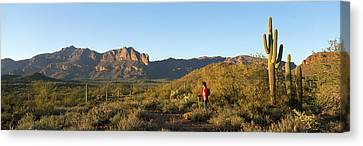 Hiker Standing On A Hill, Phoenix Canvas Print by Panoramic Images