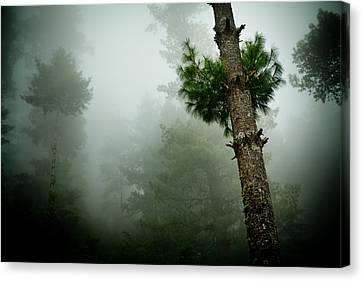 Himalyas Mist Canvas Print by Raimond Klavins