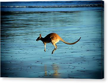 Hip And A Hop At The Beach Canvas Print by Mountain Dreams