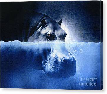 Hippo Canvas Print by Robert Foster