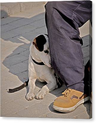His Master's Foot Canvas Print by Odd Jeppesen