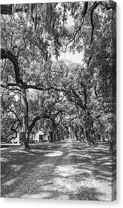 Historic Lane Bw Canvas Print by Steve Harrington