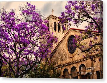 Historic Sierra Madre Congregational Church Among The Purple Jacaranda Trees  Canvas Print by Jerry Cowart
