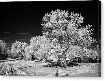 hoar frost on trees in small rural farming community during winter Forget Saskatchewan Canada Canvas Print by Joe Fox
