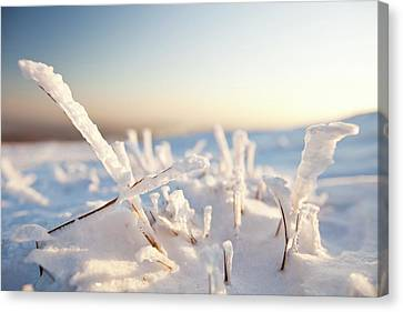 Hoare Frost On Grass Canvas Print by Ashley Cooper