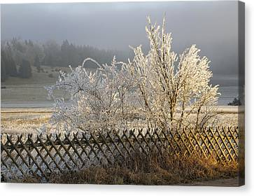 Hoarfrost In Winter Canvas Print by Matthias Hauser
