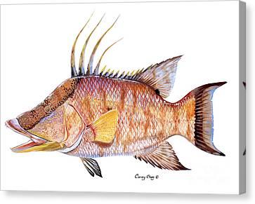 Hog Fish Canvas Print by Carey Chen