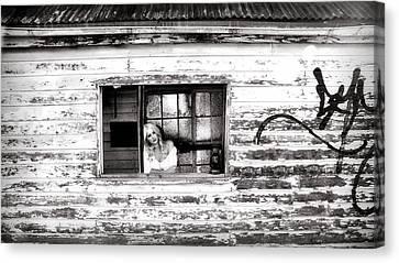 Homeward Bound II Canvas Print by David Hancock