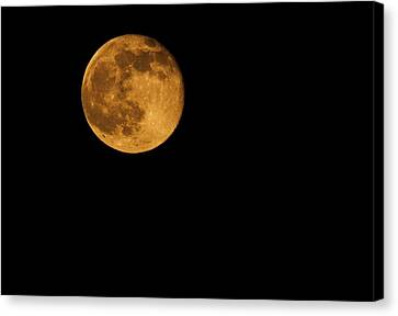 Honey Moon Full Moon 2014 Canvas Print by Dan Sproul