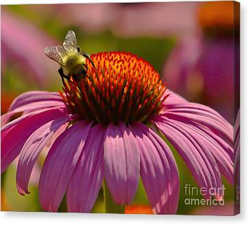 Honey Canvas Print by Timothy J Berndt