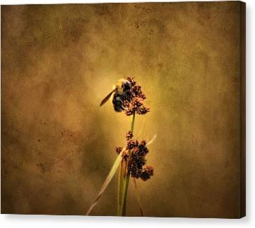 Honeybee Canvas Print by Dan Sproul