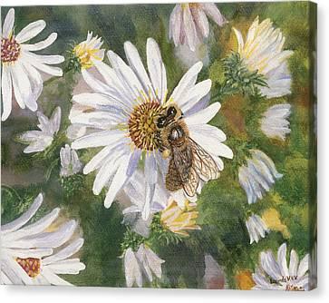 Honeybee On White Aster Canvas Print by Lucinda V VanVleck