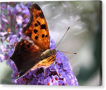 Honey's Courage Canvas Print by  The Art Of Marilyn Ridoutt-Greene