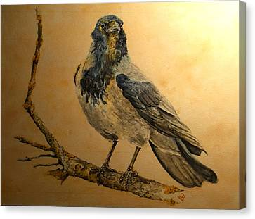 Hooded Crow Canvas Print by Juan  Bosco
