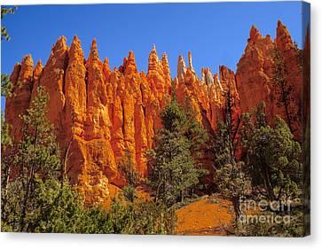 Hoodoos Along The Trail Canvas Print by Robert Bales