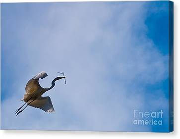 Hopeful Egret Building A Home  Canvas Print by Terry Garvin