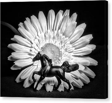 Horse And Daisy Canvas Print by Jeff  Gettis