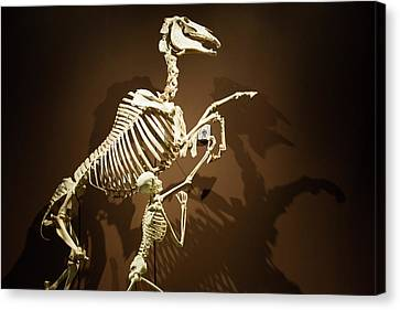 Horse And Human Skeletons Exhibit Canvas Print by Jim West