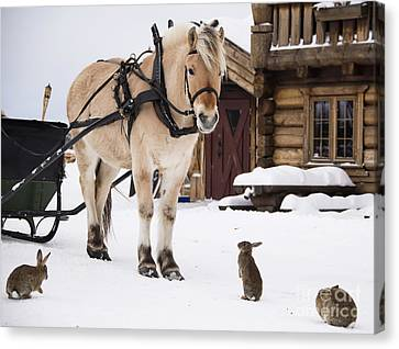 Horse And Rabbits Canvas Print by Gry Thunes